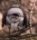 Pájaros en árbol en primavera de detrás Foto de archivo