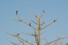 Pájaros en árbol espinoso fotos de archivo