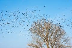 Pájaros en árbol Fondo del cielo azul Fotografía de archivo
