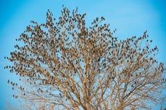 Pájaros en árbol Fondo del cielo azul Imagen de archivo
