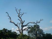 Pájaros en árbol grande Fotografía de archivo