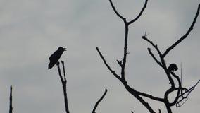 Pájaros en árbol muerto Imagenes de archivo