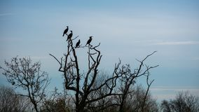 Pájaros en árbol muerto Imagen de archivo libre de regalías