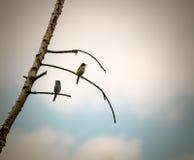 Pájaros en árbol muerto Fotografía de archivo