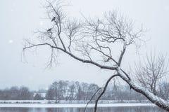 Pájaros en árbol nevoso Fotos de archivo