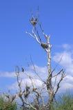 Pájaros en árbol seco Imagenes de archivo
