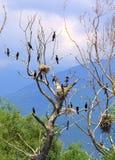 Pájaros en árbol seco Foto de archivo libre de regalías