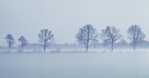 Pájaros en árboles en la puesta del sol en nieve y niebla Imagenes de archivo