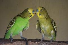 Pájaros en amor Foto de archivo libre de regalías