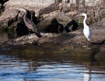 Pájaros en Aswan Imágenes de archivo libres de regalías