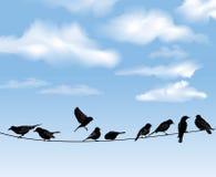 Pájaros en cielo azul