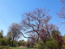 Pájaros en el árbol Fotos de archivo