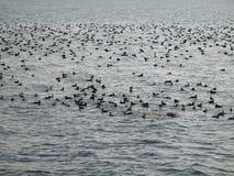 Pájaros en el agua Foto de archivo