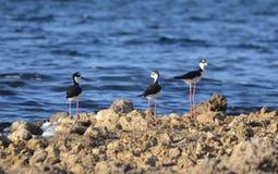 Pájaros en el agua Imagen de archivo libre de regalías
