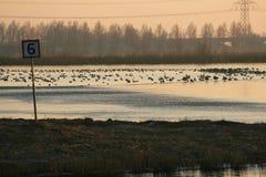 Pájaros en el agua Fotos de archivo libres de regalías