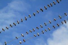Pájaros en el alambre Fotografía de archivo