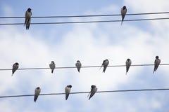 Pájaros en el alambre Foto de archivo libre de regalías