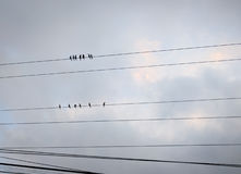 Pájaros en el alambre fotografía de archivo libre de regalías