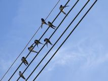 Pájaros en el alambre de telégrafo Fotos de archivo