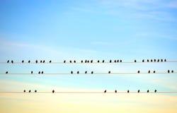 Pájaros en el alambre eléctrico Fotos de archivo