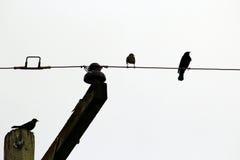 Pájaros en el alambre y el polo imagen de archivo