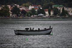 Pájaros en el barco de rowing en el lago del ohrid foto de archivo