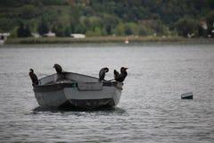 Pájaros en el barco de rowing en el lago del ohrid fotos de archivo