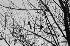 Pájaros en el bosque Fotos de archivo libres de regalías
