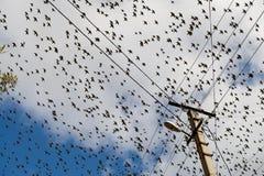 Pájaros en el cielo Fotografía de archivo
