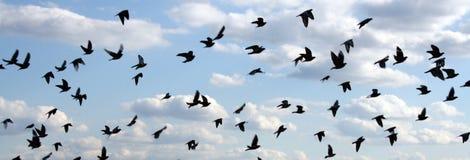 Pájaros en el cielo Foto de archivo libre de regalías