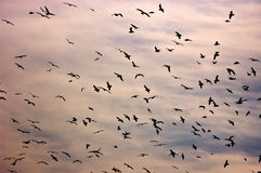 Pájaros en el cielo Imagenes de archivo