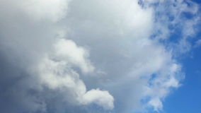 Pájaros en el cielo almacen de metraje de vídeo