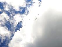 Pájaros en el cielo Imágenes de archivo libres de regalías