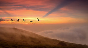 Pájaros en el concepto del otoño de la salida del sol o de la puesta del sol Imágenes de archivo libres de regalías