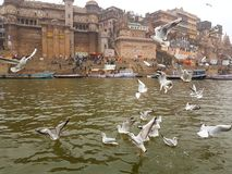 Pájaros en el Ganges fotografía de archivo libre de regalías