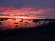 Pájaros en el lago Imagen de archivo