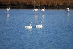 Pájaros en el lago Imagenes de archivo