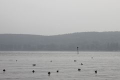 Pájaros en el lago de Constanza Imágenes de archivo libres de regalías