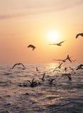 Pájaros en el mar foto de archivo