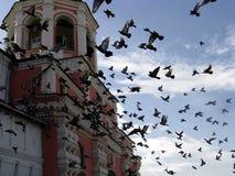 Pájaros en el monasterio de Danilov Fotografía de archivo libre de regalías