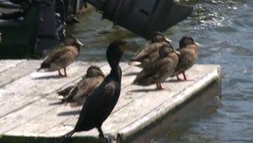 Pájaros en el muelle (2 de 3) metrajes
