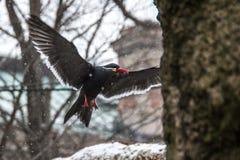 Pájaros en el parque zoológico de Bronx Imagenes de archivo