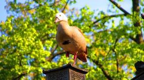 Pájaros en el parque zoológico de Francfort Imagenes de archivo
