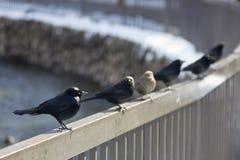 Pájaros en el pasamano Imágenes de archivo libres de regalías