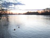 Pájaros en el río en la puesta del sol imagenes de archivo