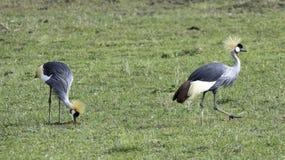 Pájaros en el salvaje Fotografía de archivo