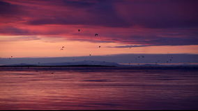 Pájaros en el vuelo en la puesta del sol
