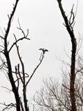 Pájaros en Grecia Fotografía de archivo libre de regalías