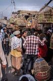 Pájaros en jaulas en el mercado en Afganistán Foto de archivo