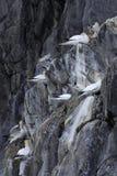 Pájaros en jerarquía Fotos de archivo